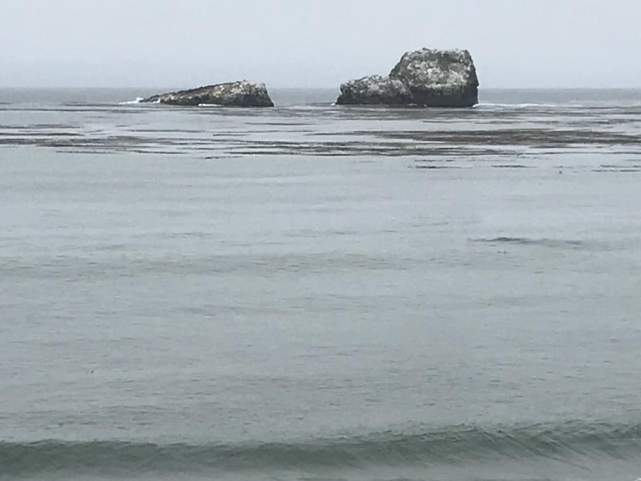 Het strand van de zeeolifanten