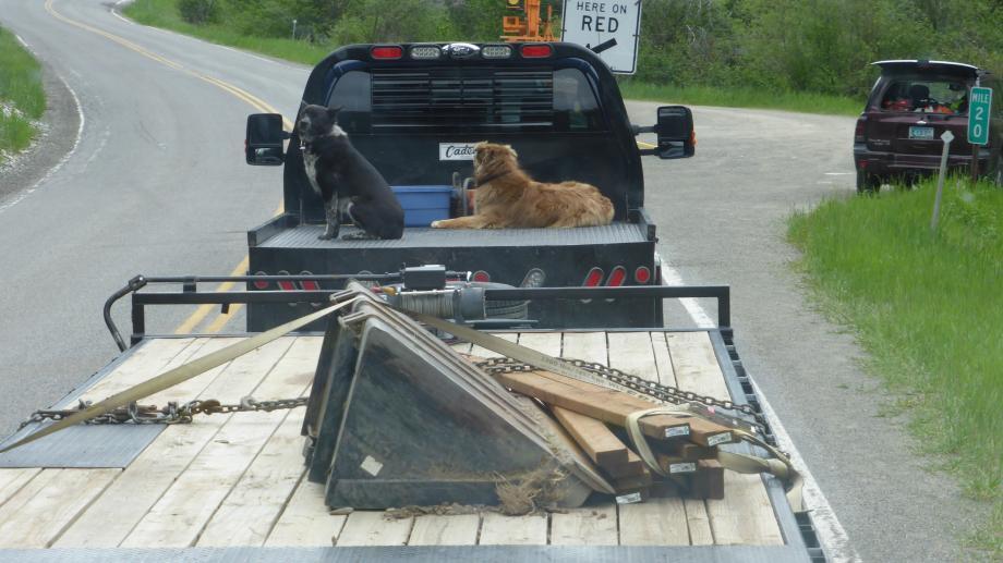 2 honden los achterop een pick up